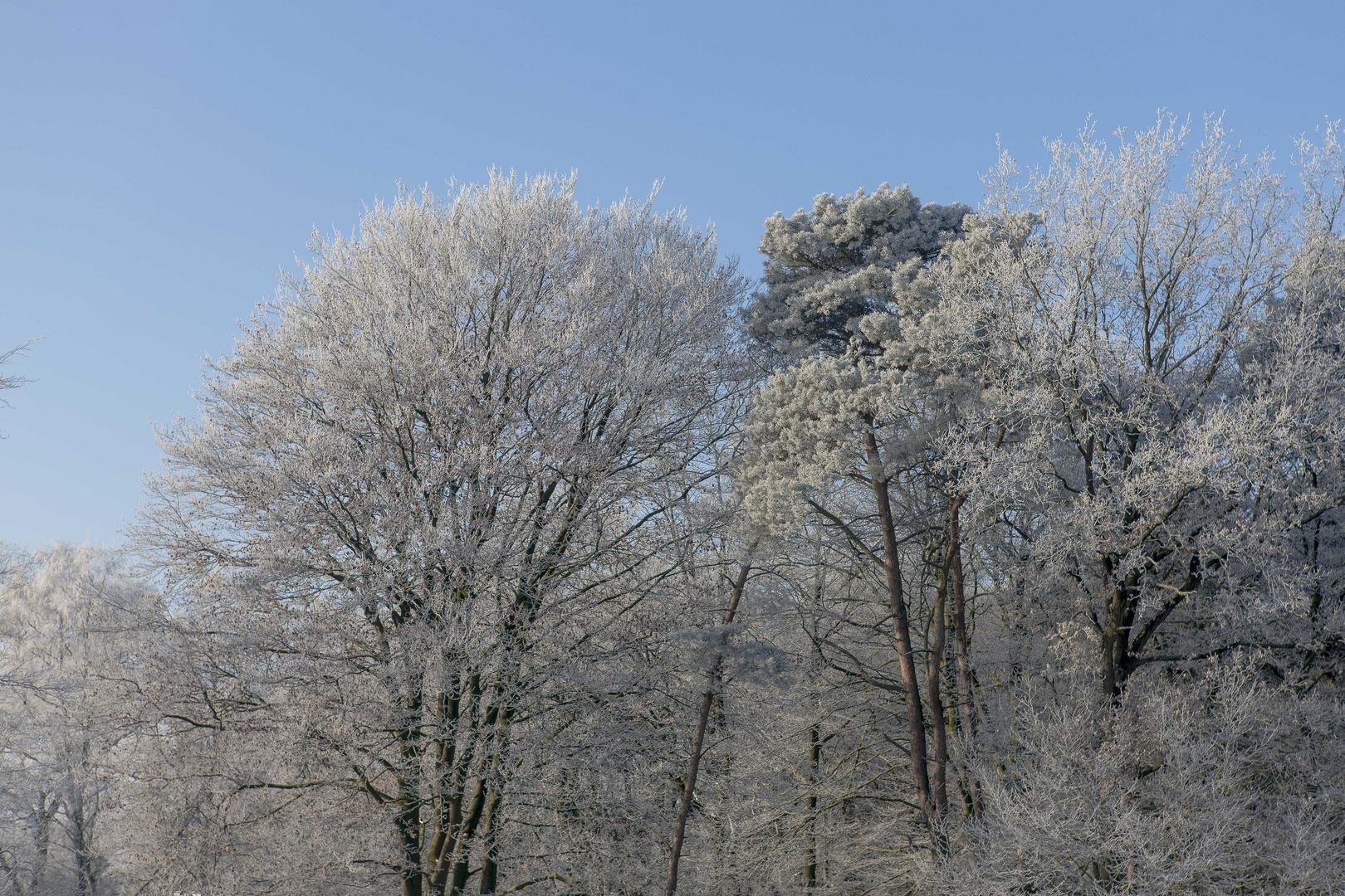 Kurz nach Sonnenaufgang am Ende der Winterzeit...