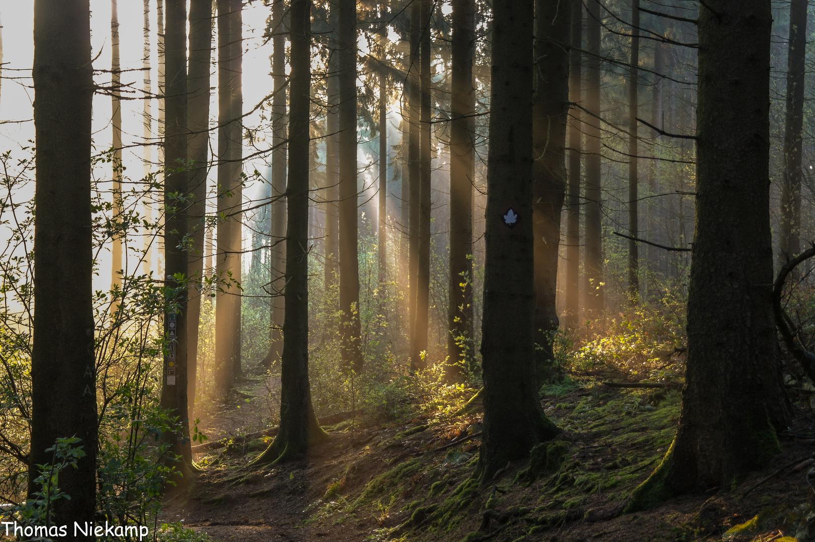 Kurz nach Sonnenaufgang im Teutoburger Wald bei Melle