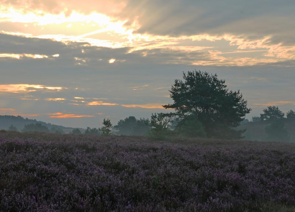 kurz nach Sonnenaufgang in der Lüneburger Heide