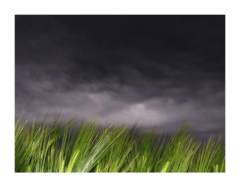 - Kurz vor dem Regen -