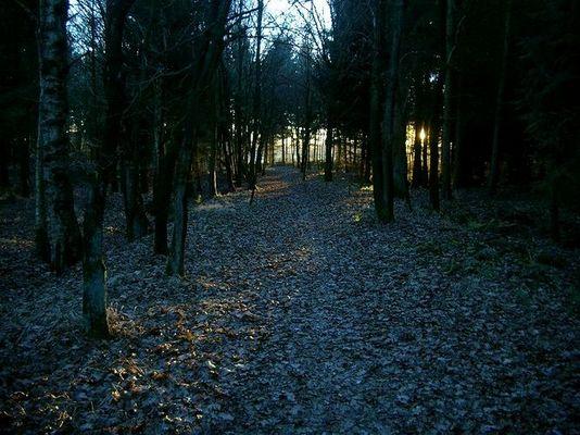 Kurz vor sechs im Wald