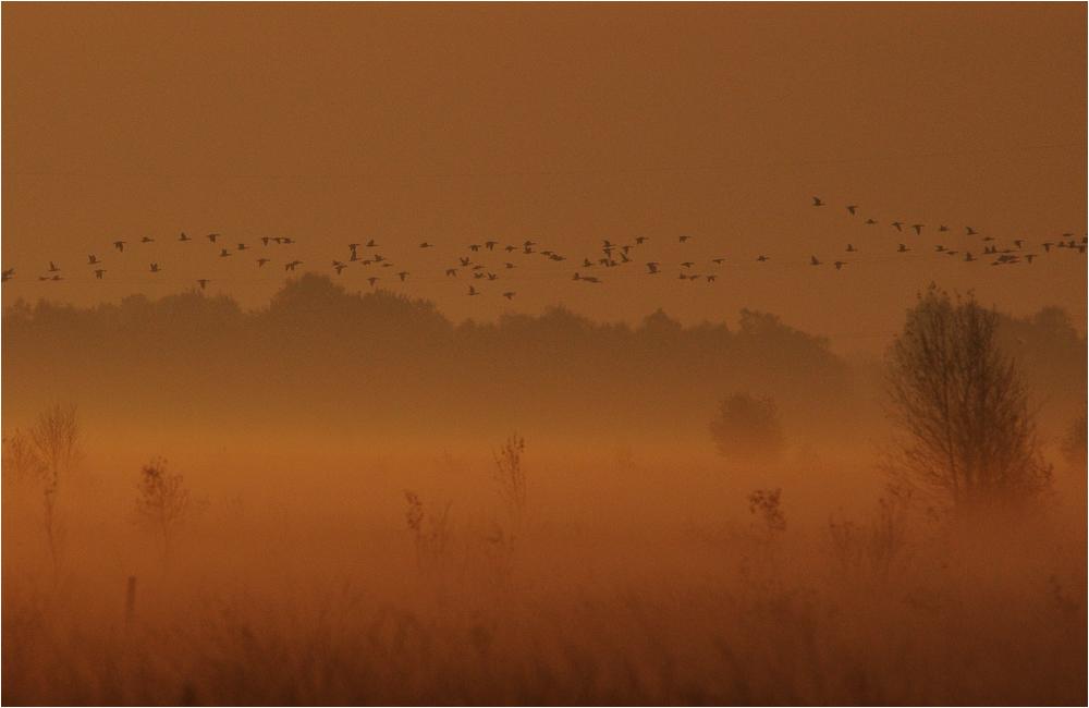 Kurz vor Sonnenaufgang im Moor . . .