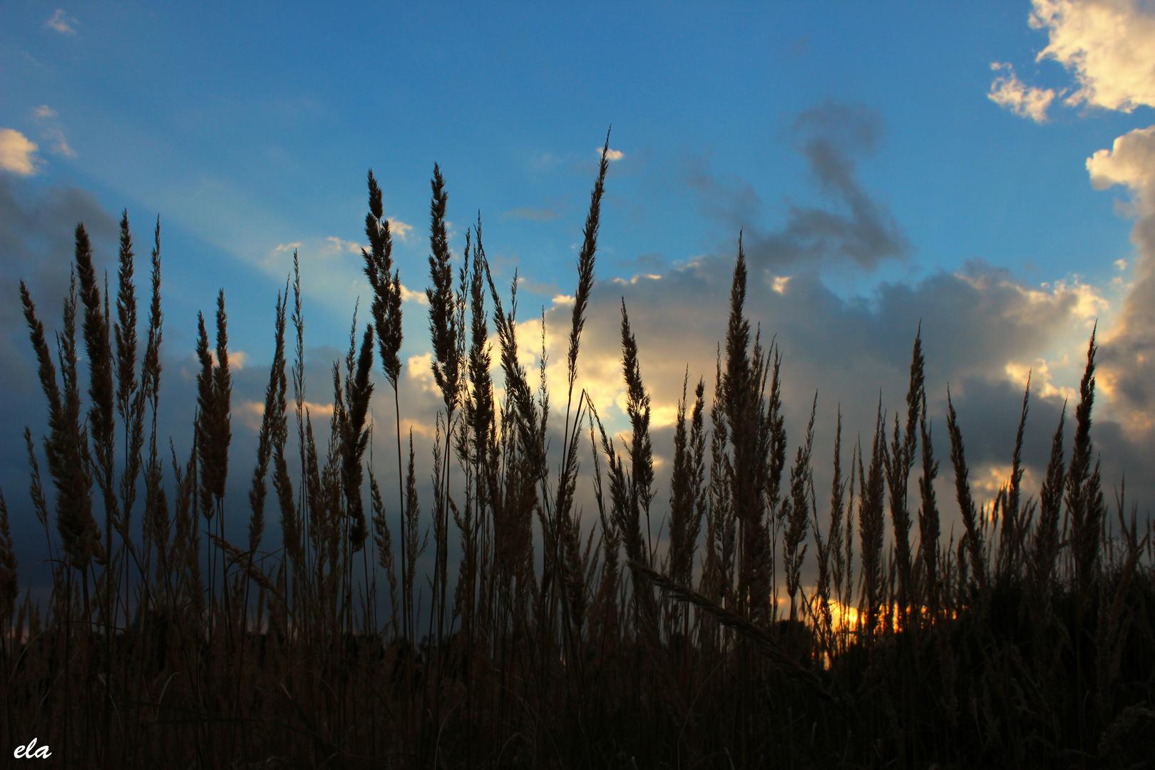 Kurz vor Sonnenuntergang
