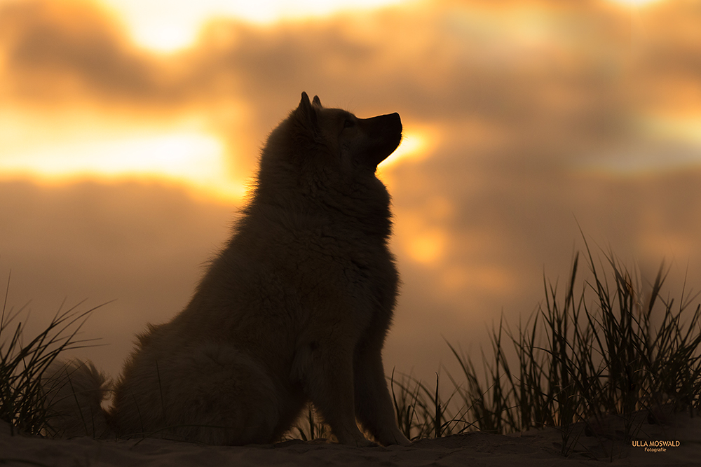 ...kurz vorm Sonnenuntergang...