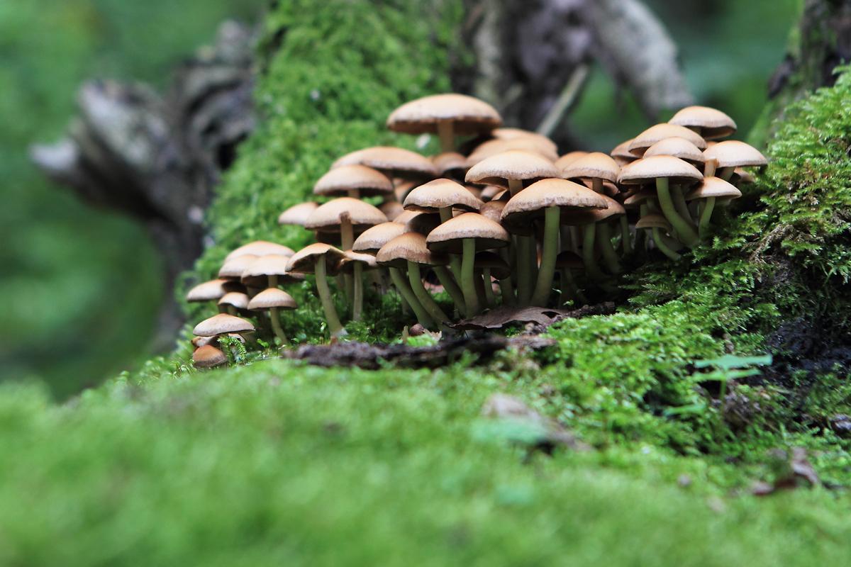 Kuschelgruppe auf dem Baum