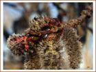 Kuschelkätzchen (2)