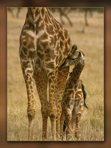 Kuscheln bei Mama