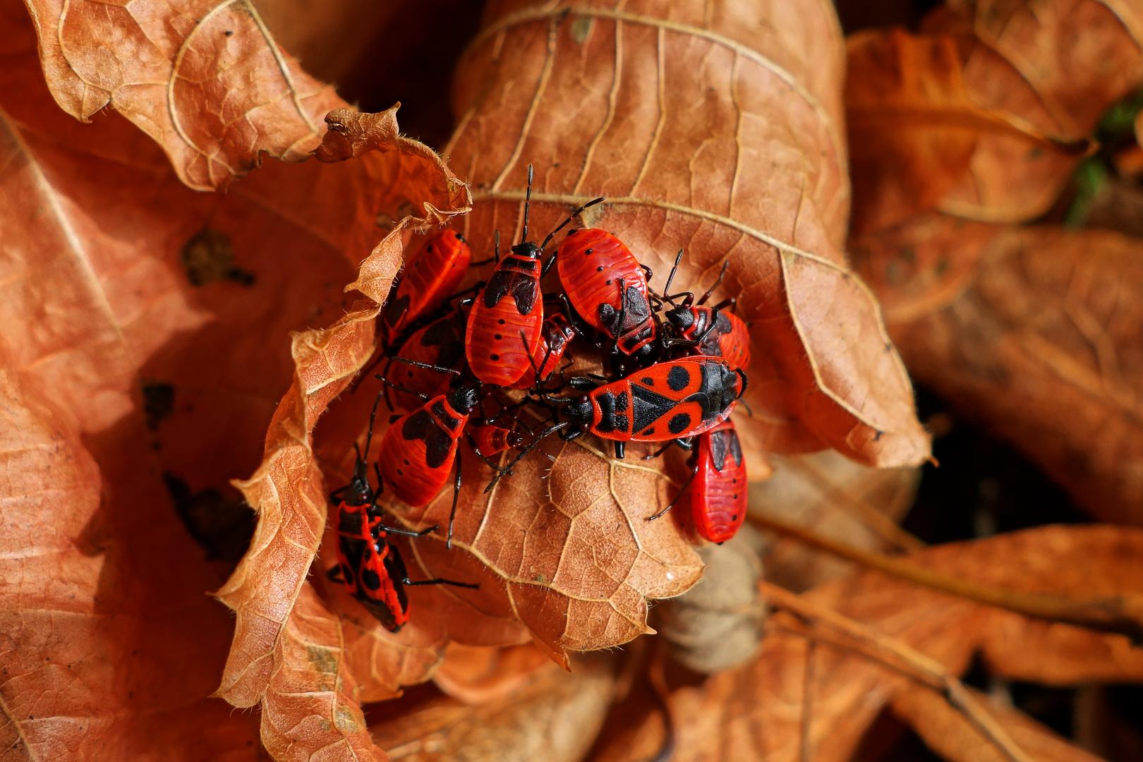 Kuscheln im Herbstlaub
