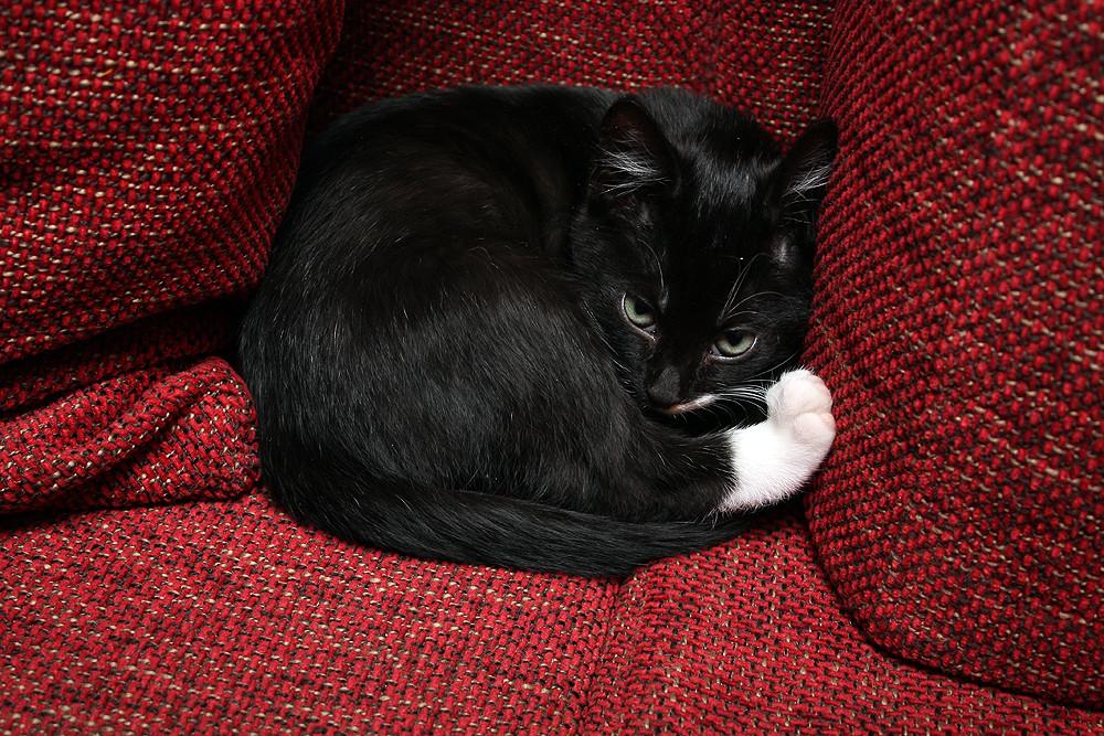 Kuschelstunde auf dem Sofa #2