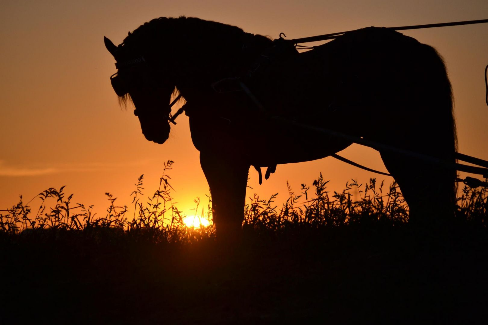 Kutsche im Sonnenuntergang