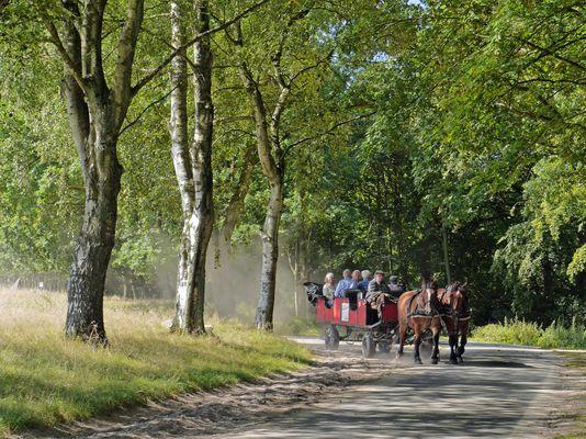 Kutschfahrt in der Lüneburger Heide