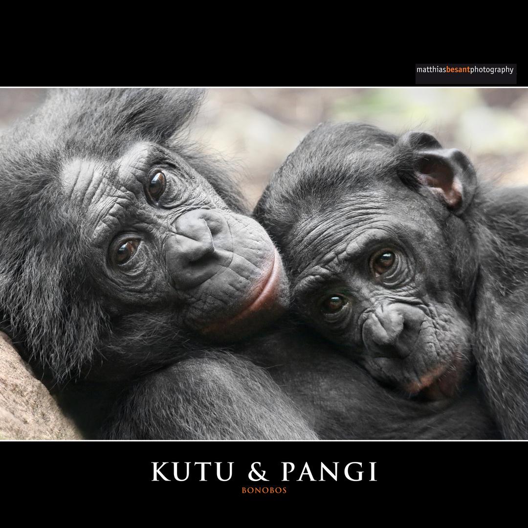 KUTU & PANGI