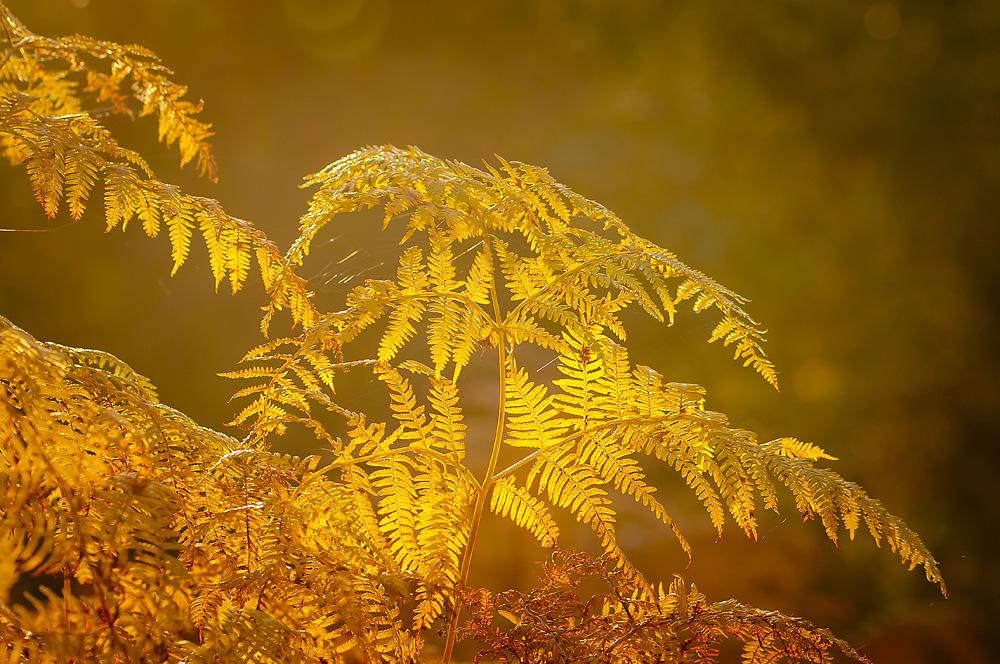 KW 42 - Goldener Herbst