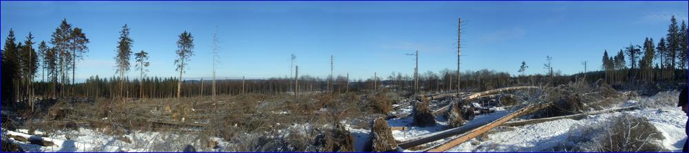 Kyrill-Wanderpfad im Sauerland Januar 2009