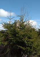 Kyrillpfad-langsame Hoffnung für immense Waldschäden