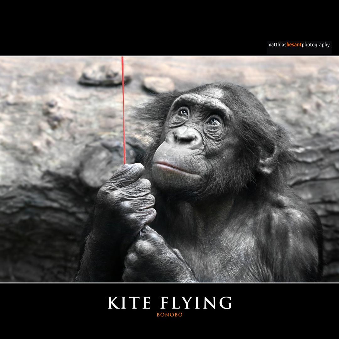 KYTE FLYING