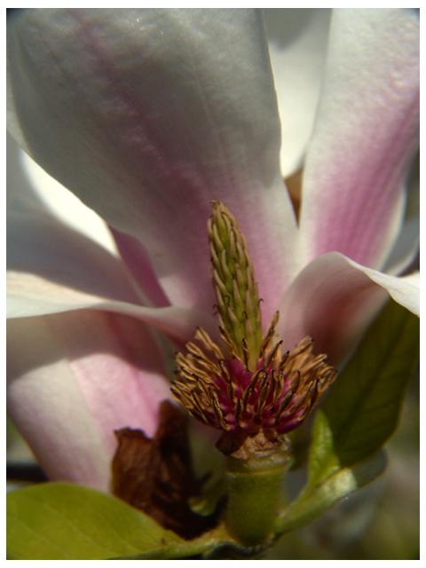 l arbre a fleur