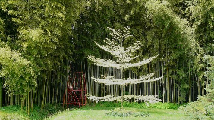 L' arbre lumineux.