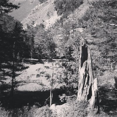 L arbre mort