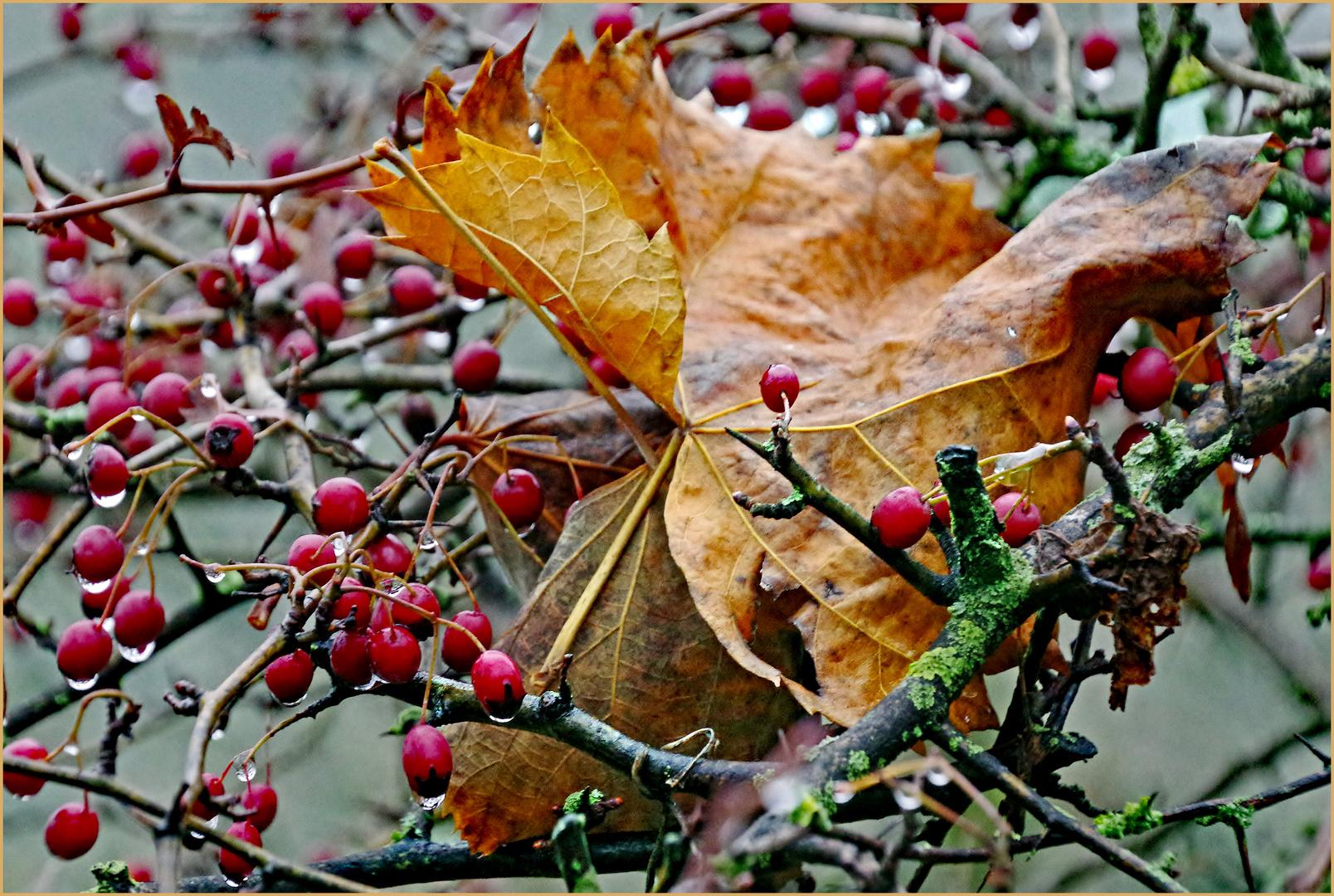 l automne est bien  au rendez  vous ...