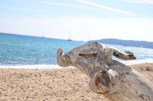l elephant de mer