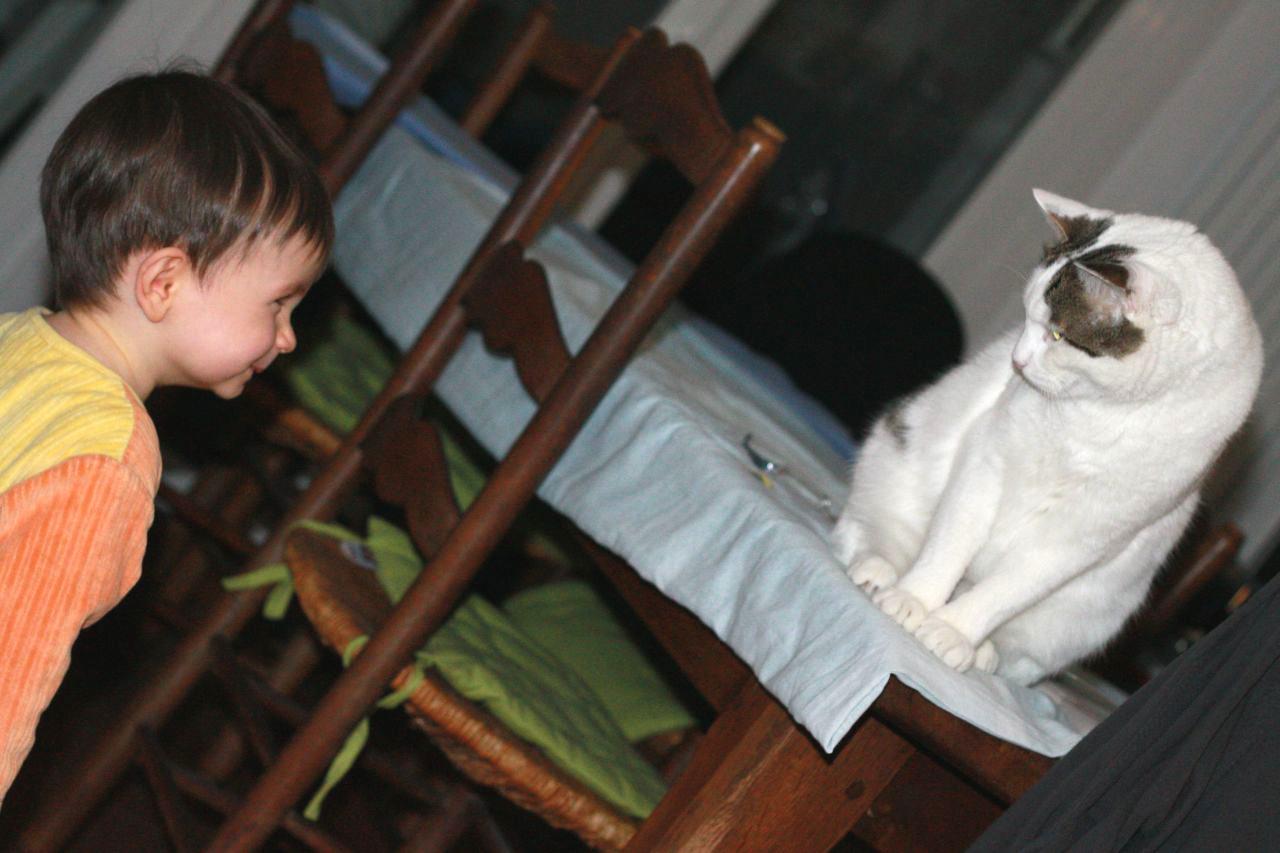 l' enfant et le chat.