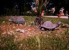 l herisson et la tortue......