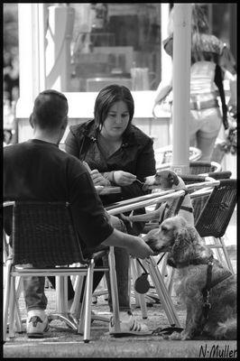 l homme est le meilleur ami du chien !