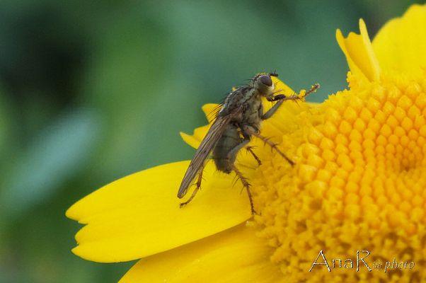 L' Insecte et la fleur