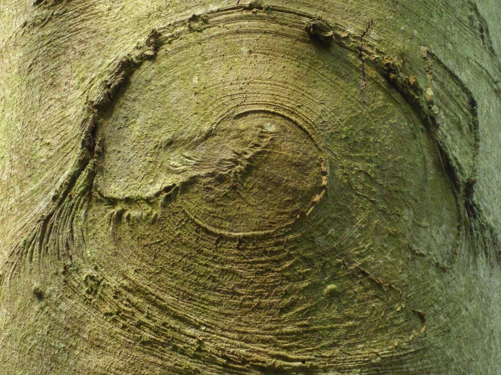 l oeil de la forêt