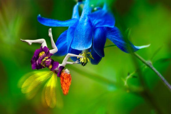 La anjana y la flor