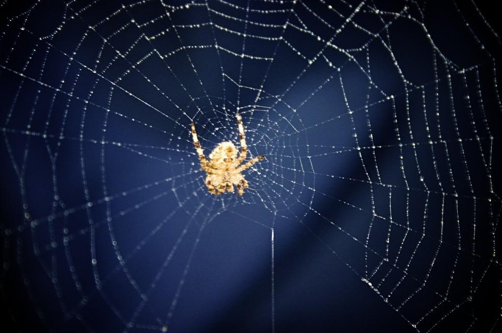 La araña en la tela