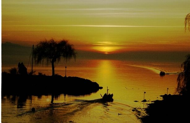 La baie d'or