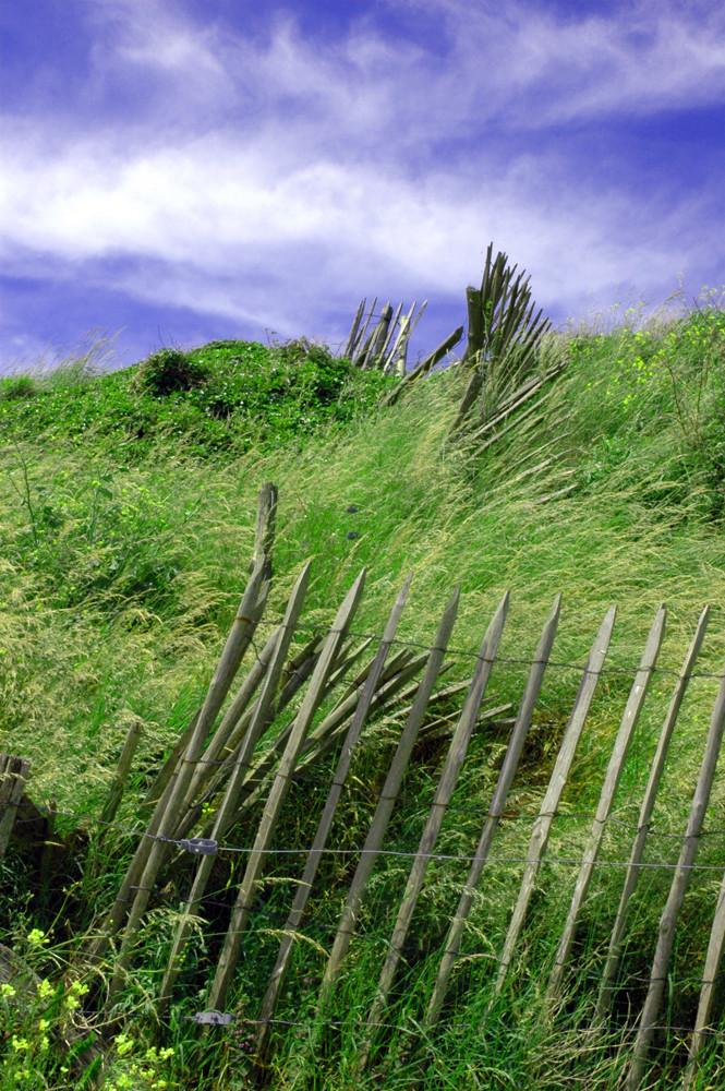 La barrière dans le vent
