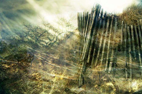 la barrière de l'arbre infini