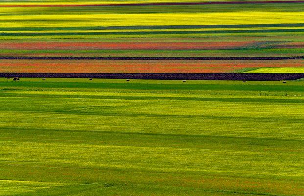 La beauté des couleurs....
