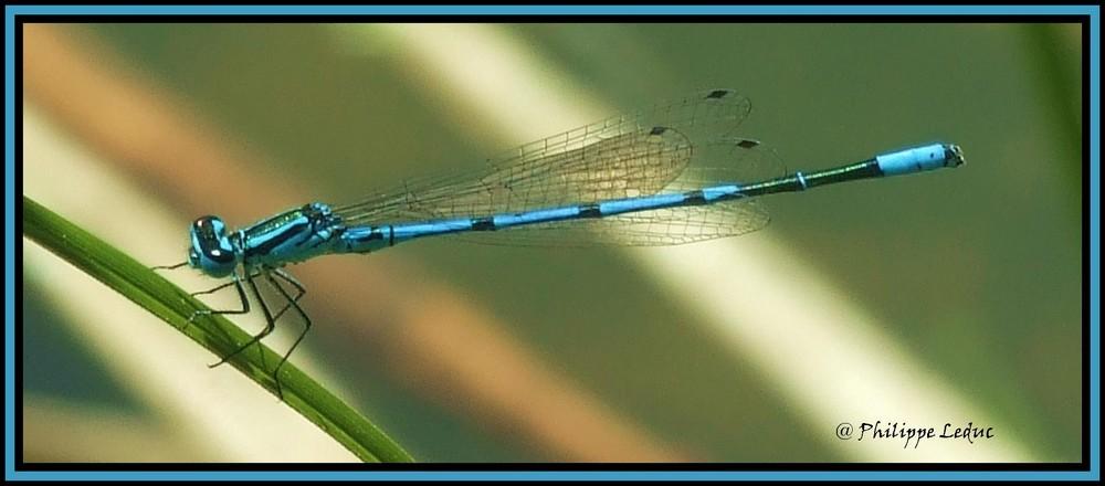 la belle bleu !!