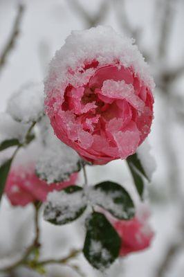 La Belle Et La Neige