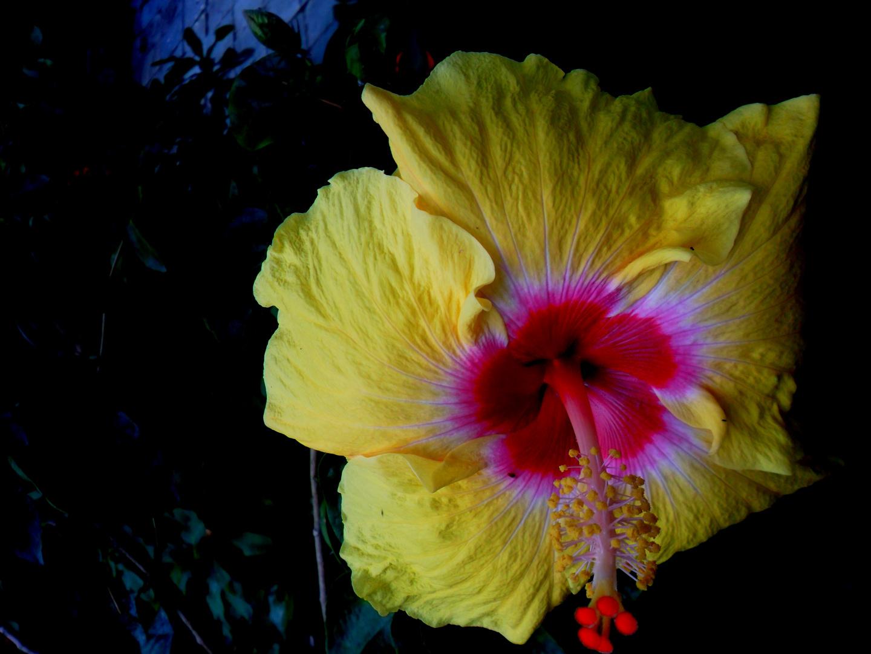 La belleza de la flor