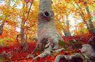 ES: La belleza del desnudo del bosque von Lilhit