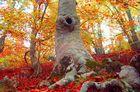 La belleza del desnudo del bosque