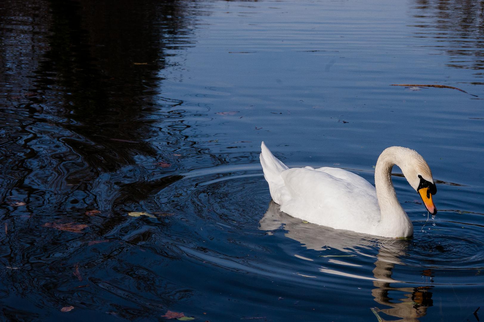 la bellezza sull'acqua (Schönheit auf dem Wasser)