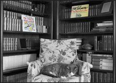 la bibliothèque du chat....