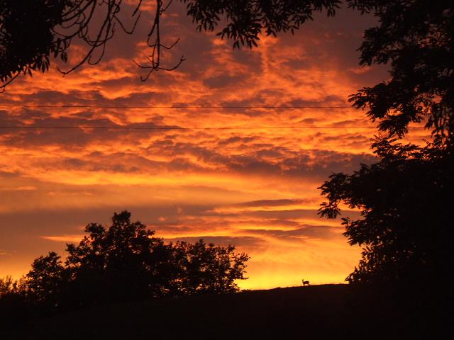 La biche au coucher du soleil