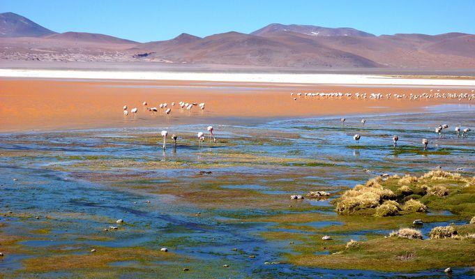 La Bolivie et ses Lagunes aux mille couleurs