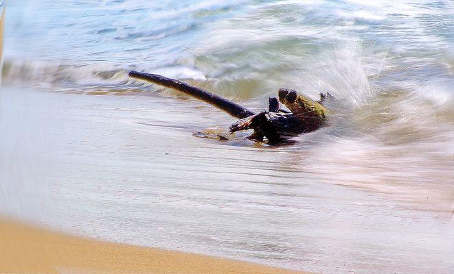 La branche de mer