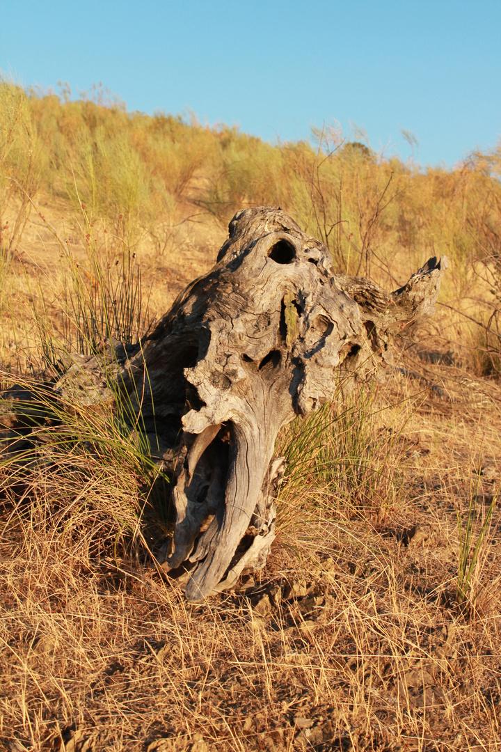 La calavera del elefante que mató el rey