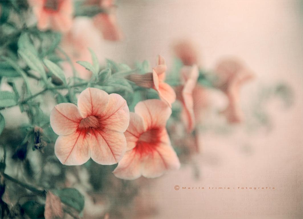La calidez de las flores ...
