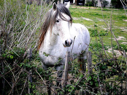 La Camargue, sur le dos d'un cheval