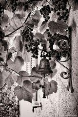 La campanella e l'uva